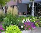 MultiFamily Landscape Maintenance