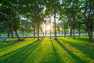 landscape management commercial landscaping environmental design edlnc